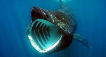 Schwimmen mit Haien vor der Küste Großbritanniens