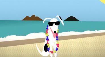 DogVacay – Von wegen Hundeleben