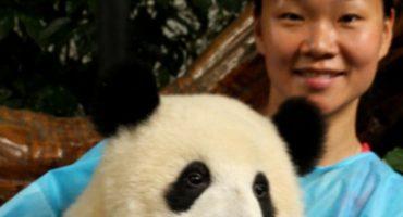 Panda-Botschafter gesucht!