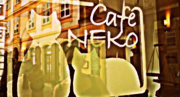 Katzen-Café in Wien