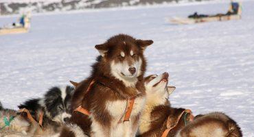 Winterliche Reisefreuden abseits der Skipisten