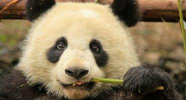 Chengdu – China abseits der Chinesischen Mauer