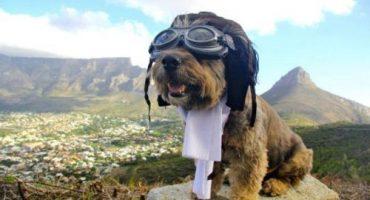 Von wegen Hundeleben – Wie Oskar um die Welt reiste