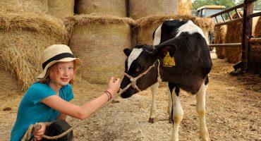 Urlaub auf dem Bauernhof – Ich glaub mich leckt 'ne Kuh