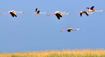 Eine Fahrt zu Frankreichs Flamingos