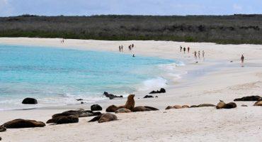 Google Street View reist zu den Galapagosinseln