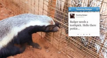 Der twitternde Honigdachs aus dem Johannesburger Zoo