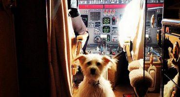 Tierischer Urlaub: Reisen mit Bello und Co.