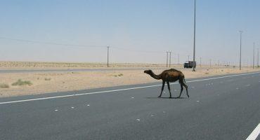 Der Irak plant erstenNationalpark