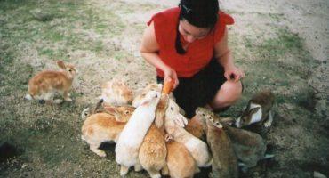 Ōkunoshima: Japans Kanincheninsel
