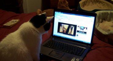 Wenn 10.000 Menschen gemeinsam Katzenvideos schauen