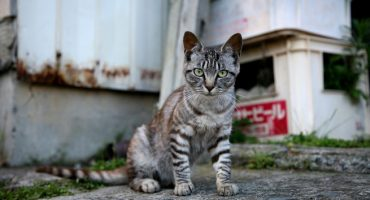 Katzenalarm auf Tashirojima