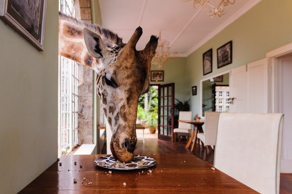Don't Leave Any Food On Your Plate – Foto: Gavin Werbeloff