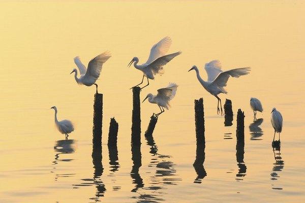 Birds in the morning light – Foto: QING SONG LIU