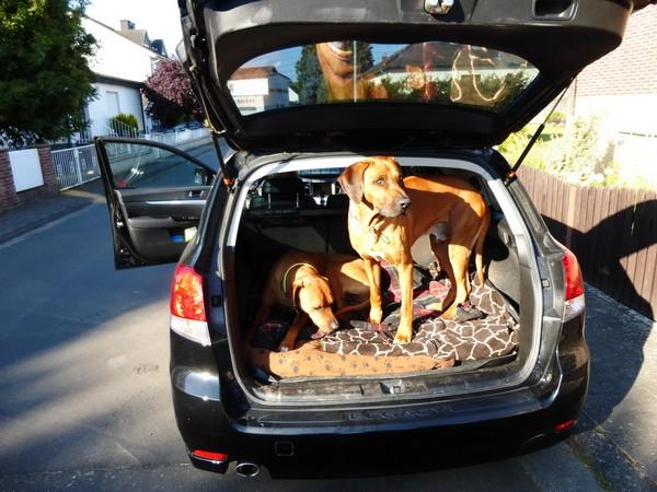hundereisenmehr-auto