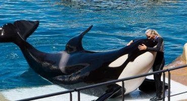 Keine Reisen mehr zu Delfinarien und Orca-Shows?