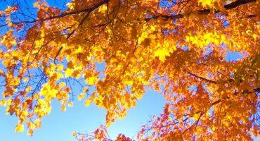 Bunte Reiseziele für den Herbst