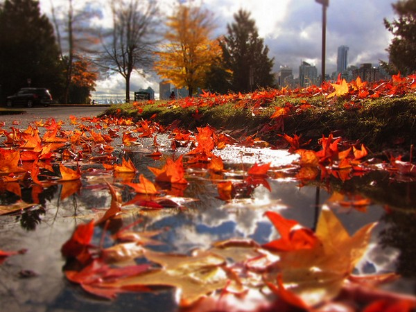 vancouver-herbst