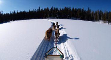 Mit dem Hundeschlitten in den Winter