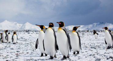 Antarktis: Touristen schleppen Krankheiten ein