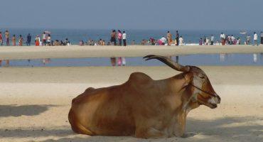 Indien führt Visum bei Ankunft ein