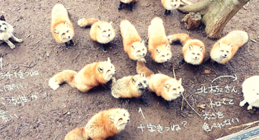 Zao, ein Fuchsdorf in Japan