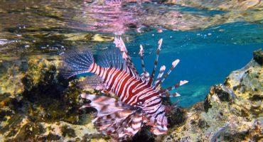 Hai, Qualle, Seeigel – Gefährliche Meeresbewohner