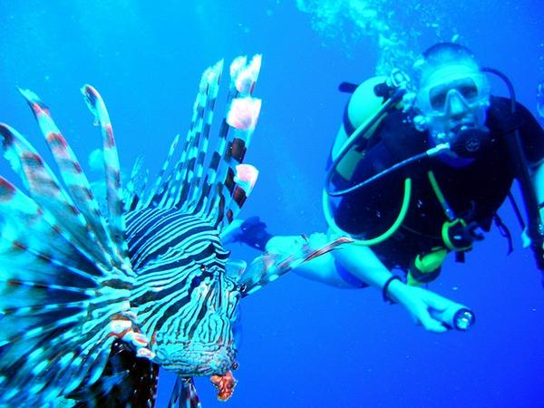 rotfeuerfisch-taucher