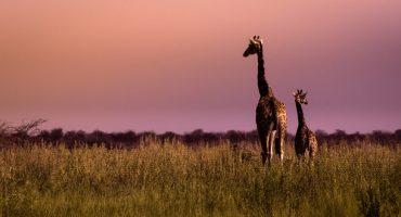 Angst hemmt Tourismuswachstum in Afrika
