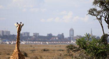 Neue Nairobi-Flüge bei der Lufthansa
