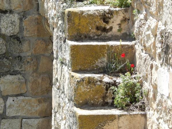 mauer-blumen-jerusalem