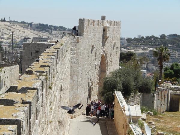 mauer-kraehen-jerusalem