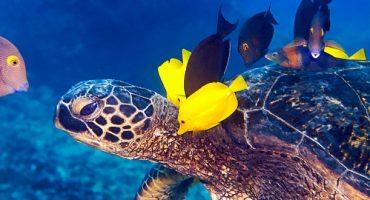 Great Barrier Reef aus der Schildkrötenperspektive