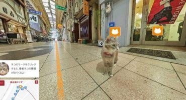 Street View aus der Katzenperspektive