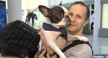 Pilot legt Zwischenstopp ein, um Hund zu retten