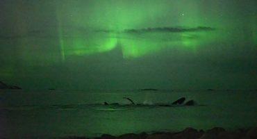Polarlicht und Wale in Tromsø