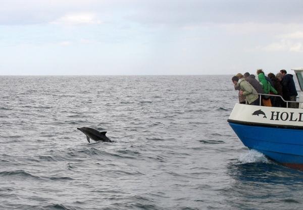 delfin-irland