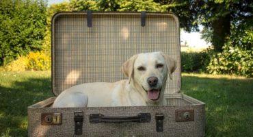 Delta befördert keine Haustiere mehr