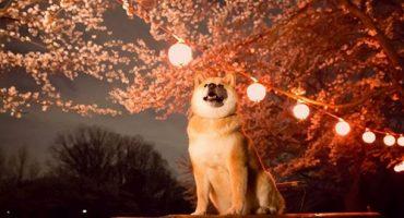 Maru der Hund ist Japans neuer Tourismus-Botschafter