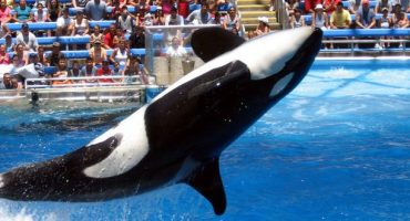 SeaWorld San Diego stellt Orca-Shows ein