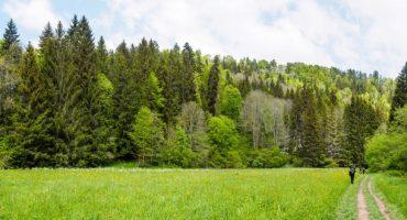 Schwarzwald-Besucher fahren kostenlos Bahn und Bus