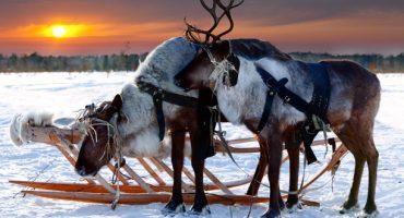 Welches Reiseziel passt zu Weihnachten am besten zu Ihnen?