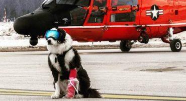 Dieser coole Hund sorgt für Sicherheit auf der Landebahn