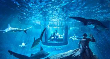 Airbnb verlost Übernachtung im Haifischbecken