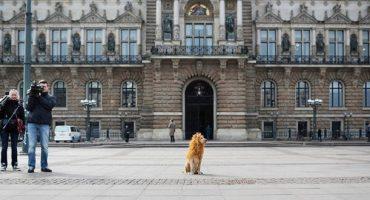 Tschikko, der Großstadtlöwe von Hamburg