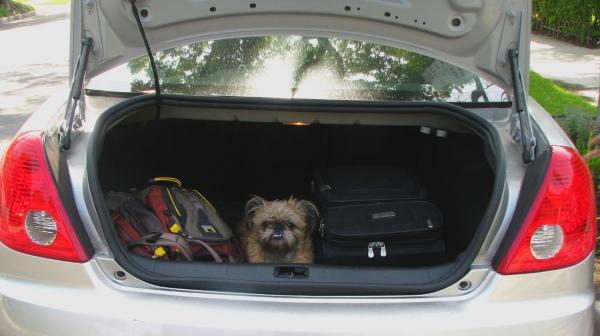 hund-auto-kofferraum