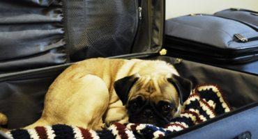 US-Flughäfen richten Hundeklos in Terminals ein