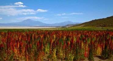Peru präsentiert touristische Quinoa-Route
