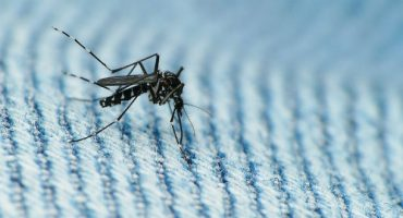 Zika-Virus: Reisewarnung für Miami