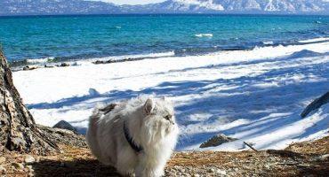 Tierische Weltenbummler: Kater Gandalf bereist fremde Länder